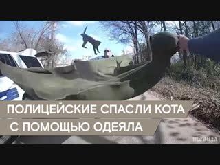 Настоящие полицейские спасают всех. И котят тоже
