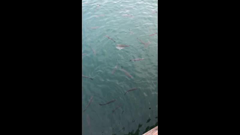 Il Pesce Pazzo