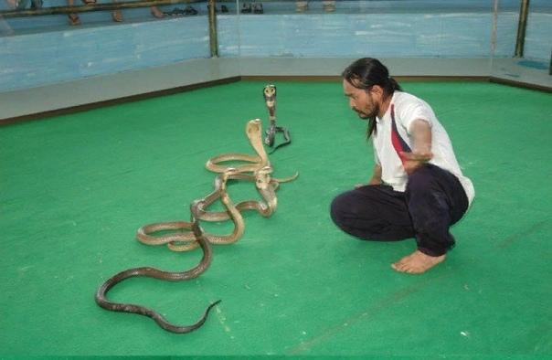 Развлечения, связанные с чудовищной эксплуатацией животных, которые немедленно следует запретить на законодательном уровне. КОНТАКТНЫЙ ЗООПАРККонтактные зоопарки-одно из самых популярных детских