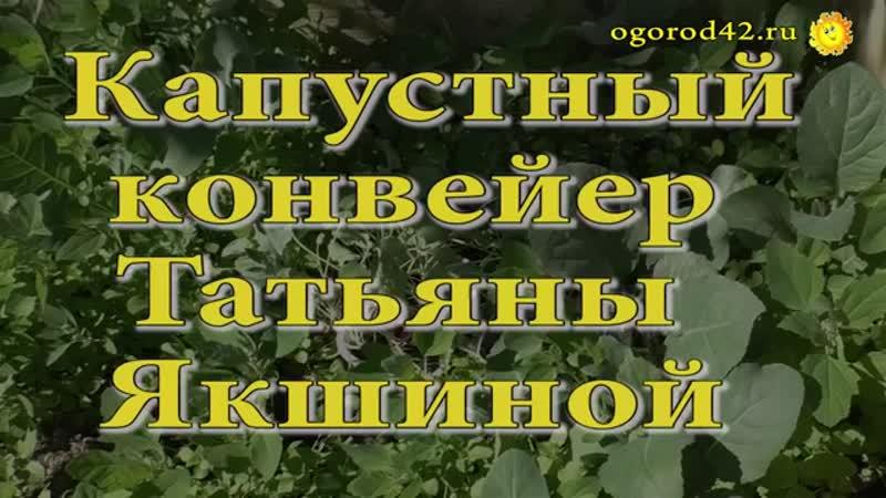 Капустный конвейер Татьяны Якшиной.mp4
