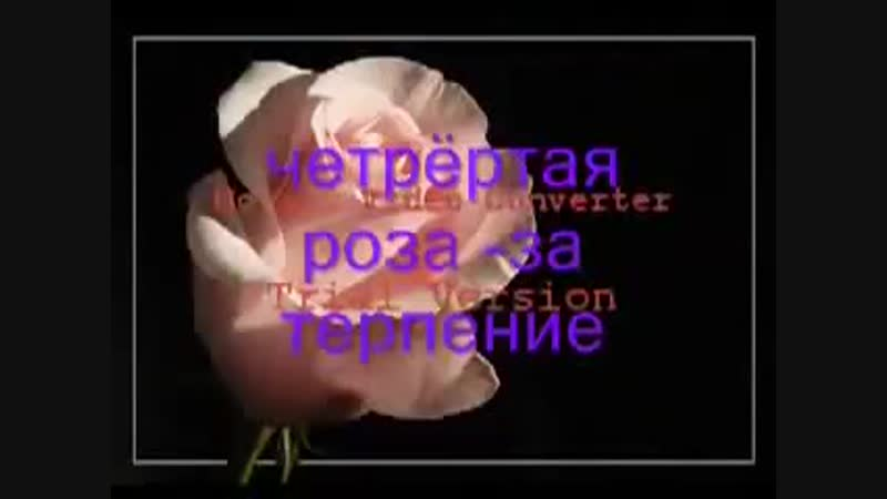 [v-s.mobi]Девять прекрасных роз для тебя