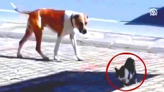 Собака спасает раненного кота. Больше миллиона просмотров!