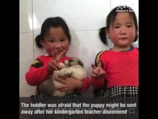 Save The Puppy - Imgur