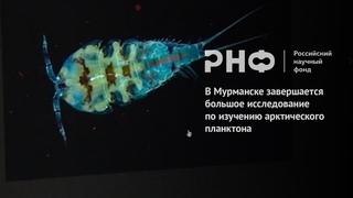 В Мурманске завершается большое исследование по изучению арктического планктона