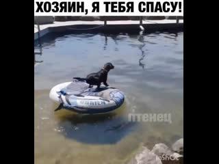 Почему собаке не выдали весло! Изверги!