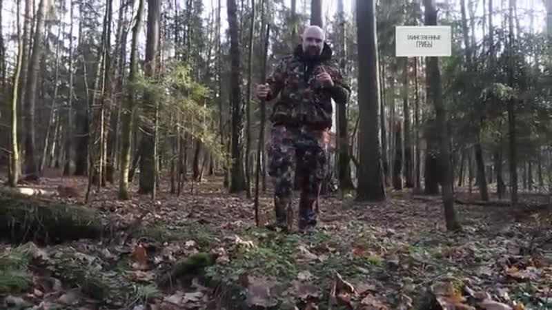 Баженов как устроен мир таинственные грибы 25 11 19