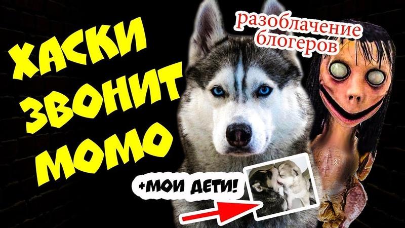 DOGVLOG: ЧТО ТАКОЕ МОМО? Почему MOMO страшно КРЯХТИТ и ШИПИТ? Говорящая собака momo