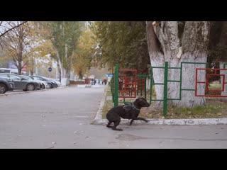 Социальный эксперимент - почему НЕЛЬЗЯ привязывать собаку одну на улице