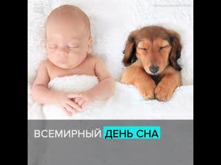 Всемирный день сна  Москва 24