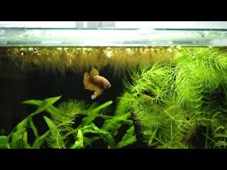 All my betta fish. planted betta fish tank setups