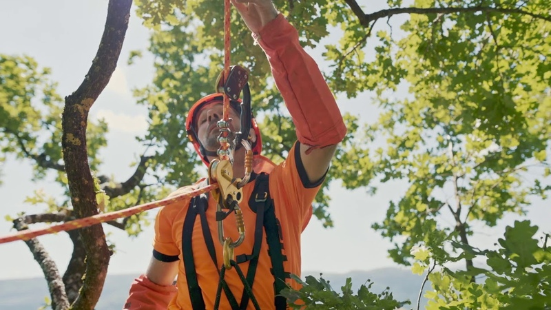 Move In Trees - Petzl