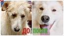 Бездомная собака из России улетает в Альпы Семья передает привет