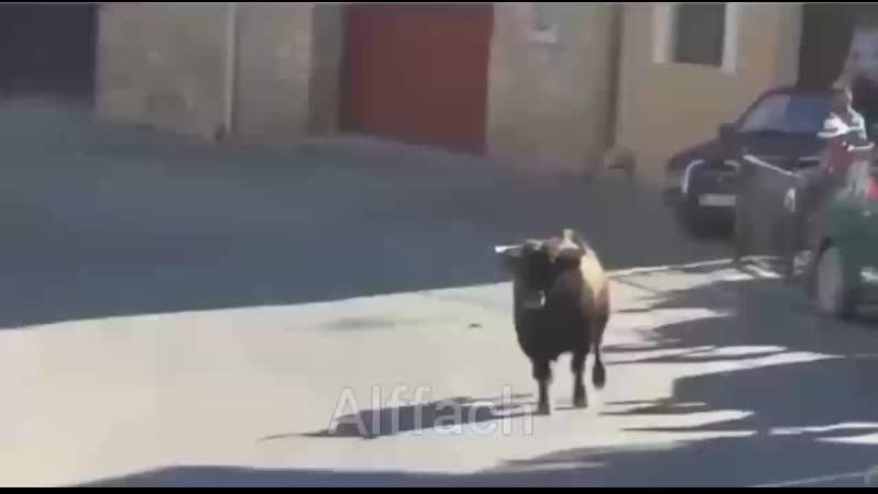 Мощь быка