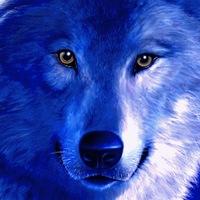 wolfcase/кейсы вк коин