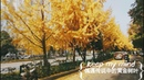 偶遇传说中的黄金树叶,会有好运吗 Encounter the golden leaf in the legend, can you have good luck