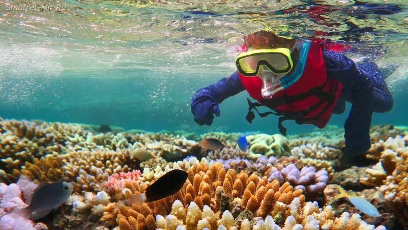 Большой Барьерный риф Great Barrier Reef