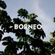 Borneo - Esperando