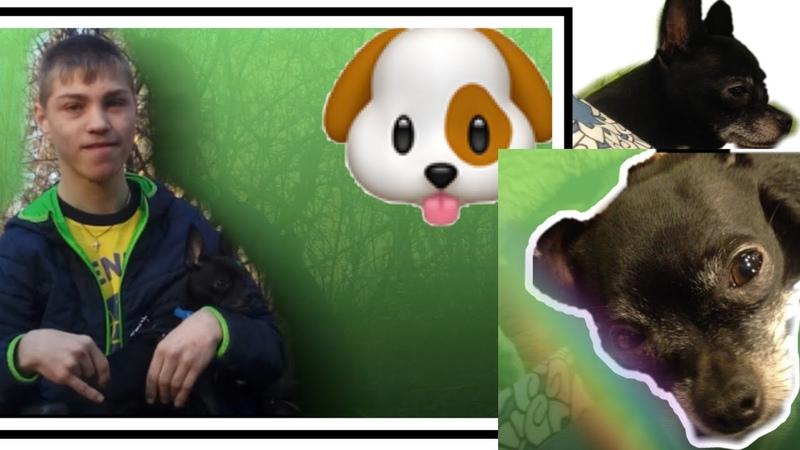 Знакомство Жизнь Собаки 1 серия