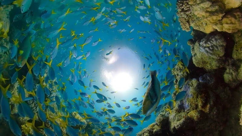 GoPro Awards Great Barrier Reef with Fusion Overcapture in 4K