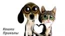 Видео смешные кошки и котята и коты до слёз приколы/Смешные коты и собаки 2020