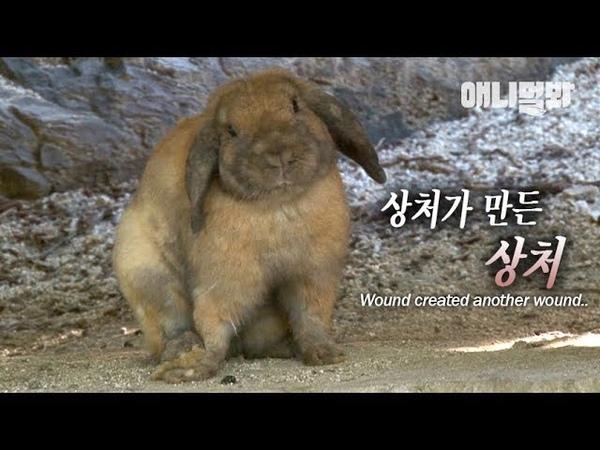편집증 환자가 된 토끼 l Adorable Rabbit Has Become Paranoid