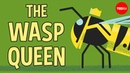 Licking bees and pulping trees The reign of a wasp queen Kenny Coogan