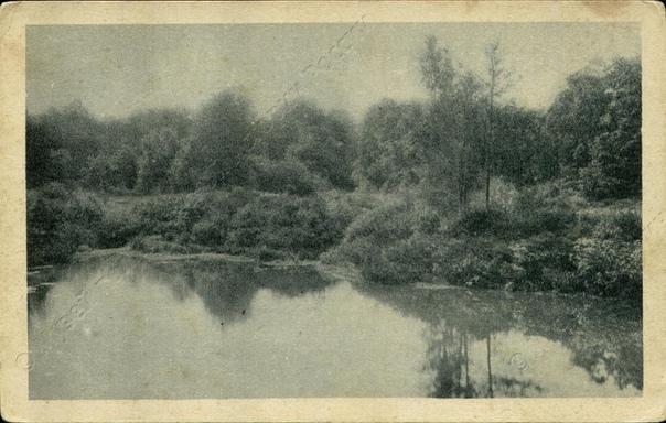 лесной институт пруд петербург фото