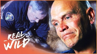 Police Dog Makes The Ultimate Sacrifice To Stop Armed Man | Pet Heroes | Real Wild