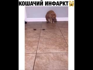 Так котик из рыжего может превратиться в серого