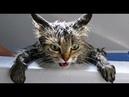 Приколы с котами Приколы с животнымиПозитивВидео про котов