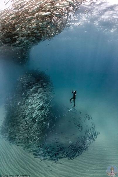 «Рыбное торнадо»