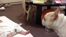 собака успокаивает плачущего ребенка собака самый честный и самый близкий друг человека