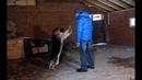Как помочь собаке избавиться от возбуждения(Немецкая овчарка Наоми)