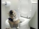 Обалденно смешные кошки! Подборка приколов с котами и кошками / funny cats animals video