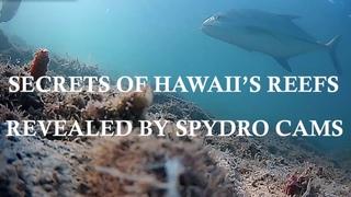 Secrets of Hawaii's Reefs Revealed by Spydro UW Cam