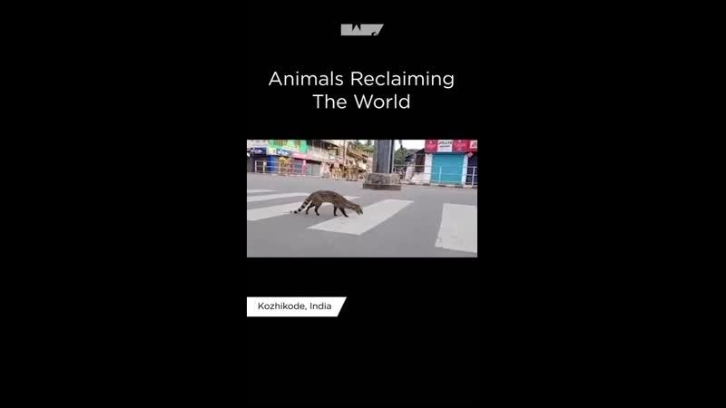 VIDEO 2020 04 26 17 03