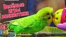 Приколы с попугаем Волнистый попугай играет