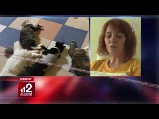 Шок! 65 кошек и 1 собака погибли в приюте при неизвестных обстоятельствах