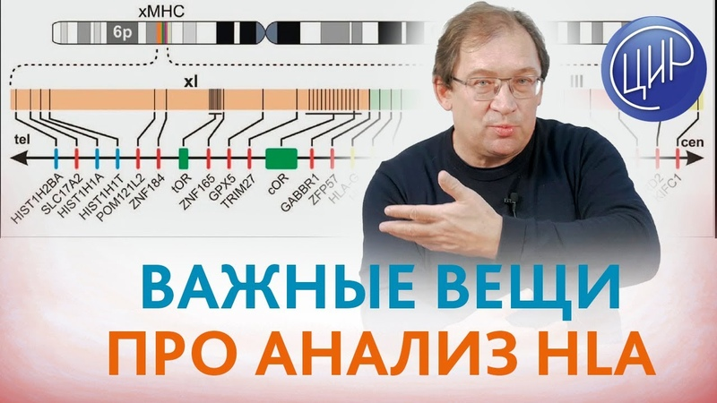Анализ HLA. HLA-типирование при диагностике причин бесплодия и невынашивания беременности. Гузов И.И