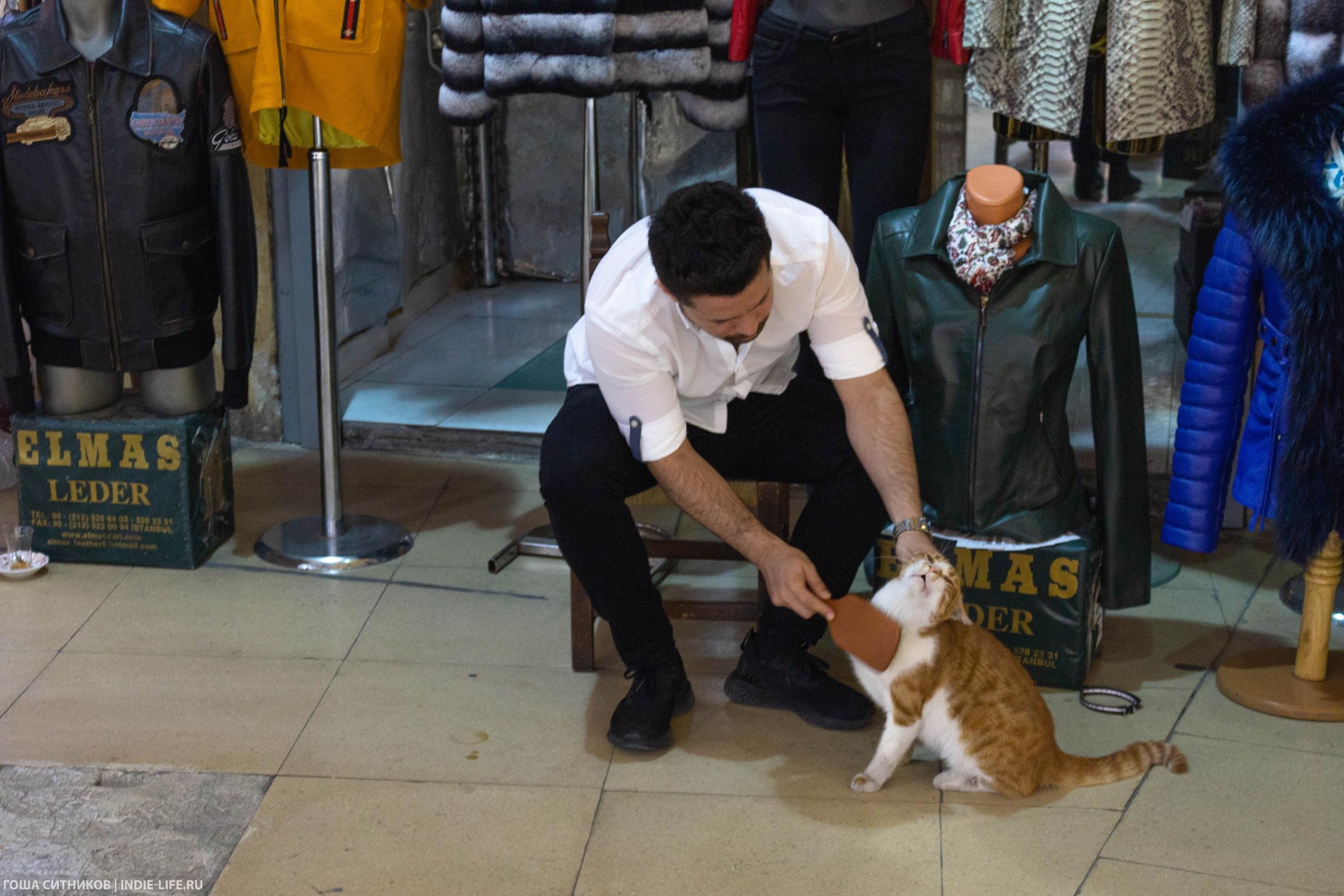 Кот на Большом Базаре Стамбул