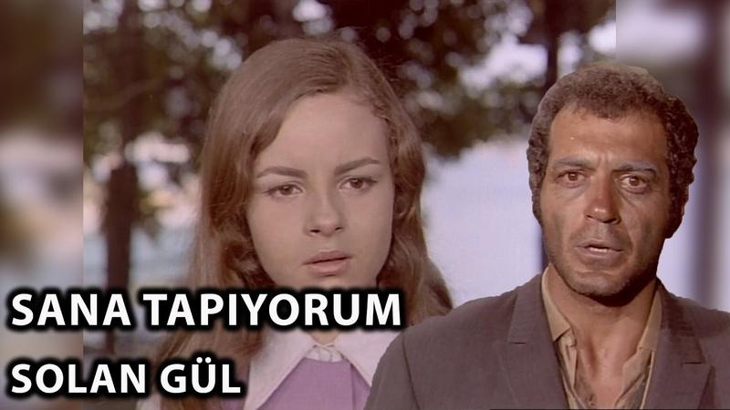 Ayşecik Sana Tapıyorum Solan Gül 1971 Zeynep Değirmencioğlu Fikret Hakan