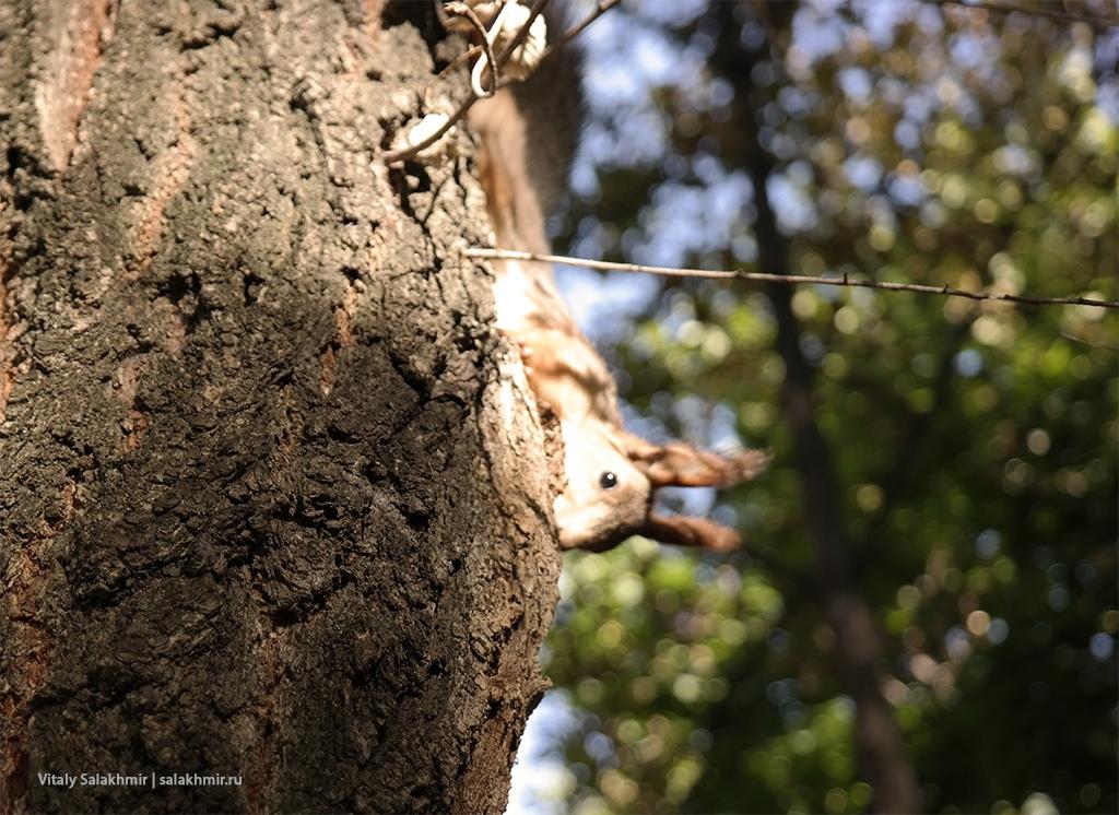 Белка на дереве, Парк Победы 2019