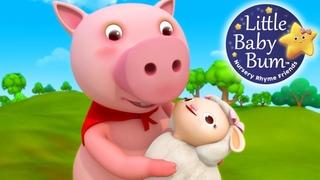 Little Bo Peep Has Lost Her Sheep | Little Baby Bum | Nursery Rhymes for Babies