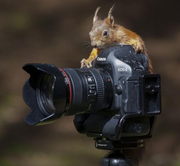 товаров фотоаппарат и животные картинки этот