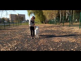 Мэр Курска требует еще раз закатать в асфальт площадку для выгула