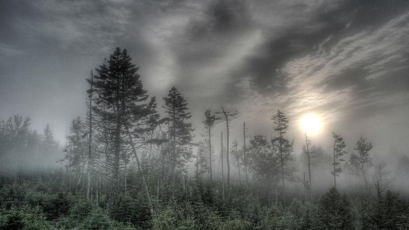 Боровский лес шумит и стонет