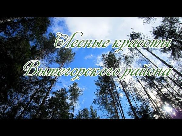 Лесные красоты Вытегорского района