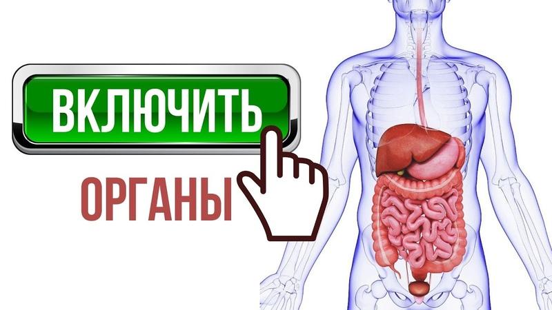 ВКЛЮЧИТЬ ОРГАНЫ ПИЩЕВАРЕНИЯ 💡 Желчный пузырь печень желудок кишечник поджелудочную