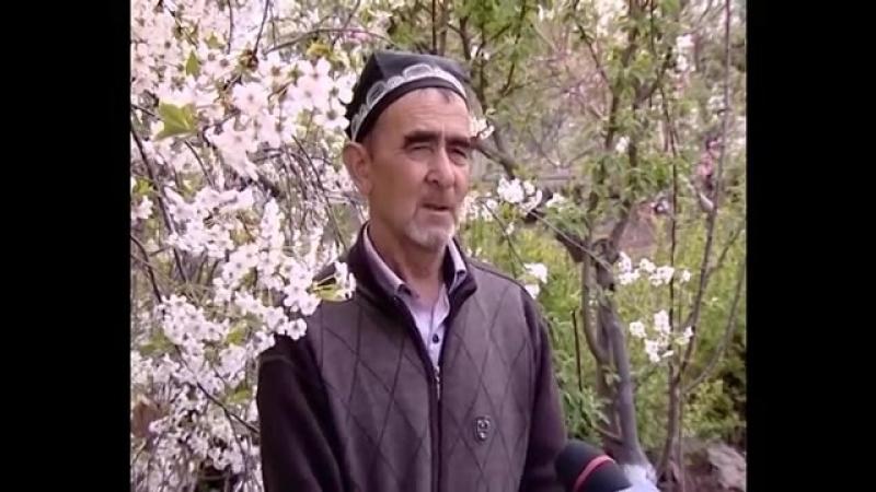 KAT QAL'A 'QISHLOG'IM' KO'RSATUVI 25 04 2017 XORAZM