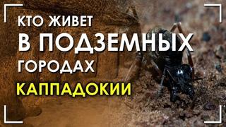 Кто живет в подземных городах Каппадокии? Николай Субботин